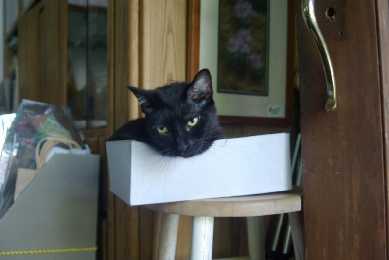 black cat in box