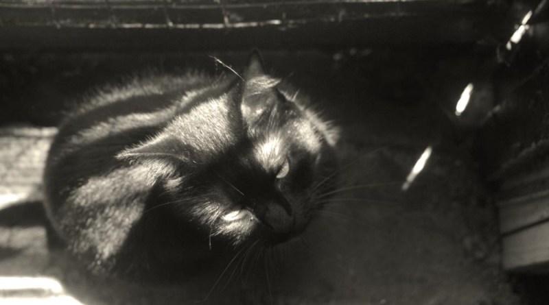 black cat in sun speckles