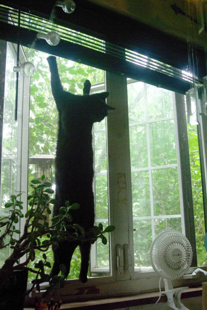 black cat hanging on screen