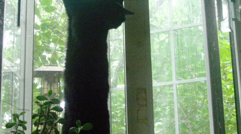 black cat hanging on screen