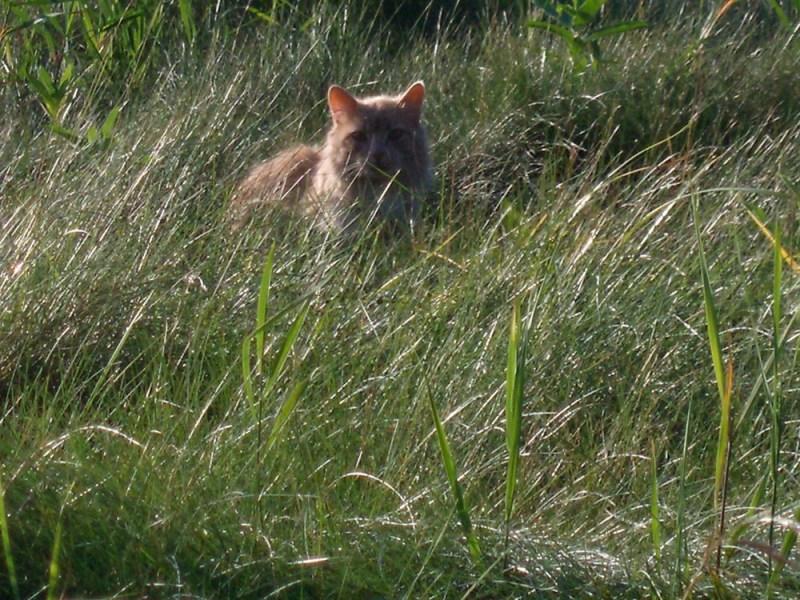 orange cat in grassy field
