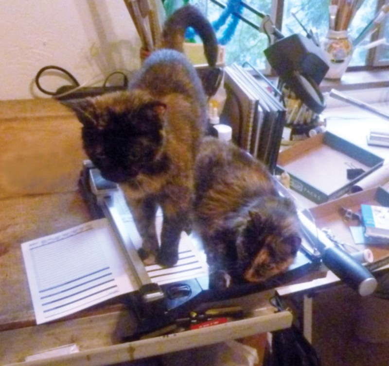 two cats on art table