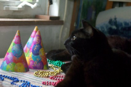 black cat with party hats