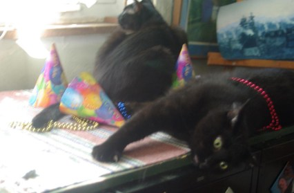 black cats with party hats