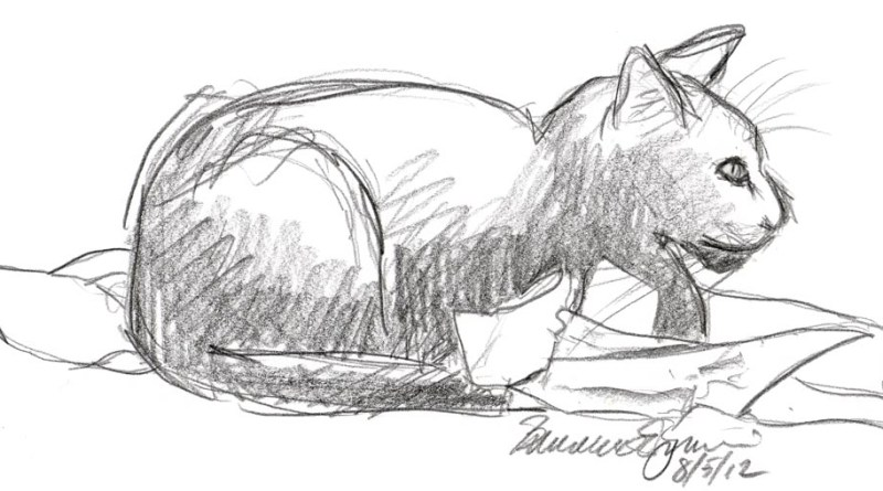 sketch of cat on crumpled paper