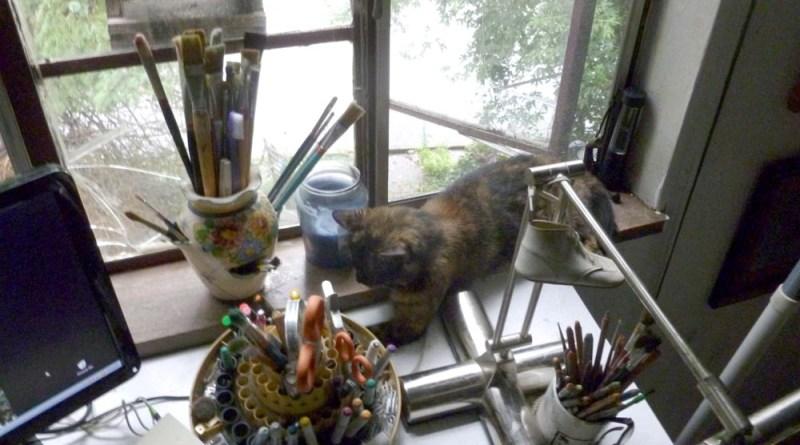 tortoiseshell cat on desl