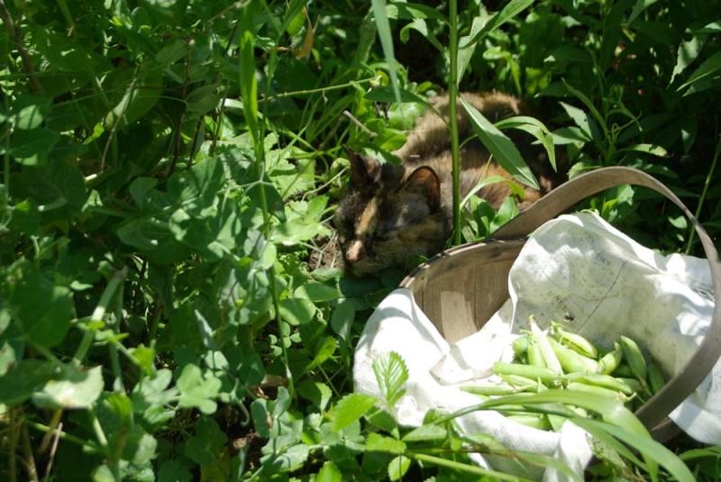 tortoiseshell cat in garden