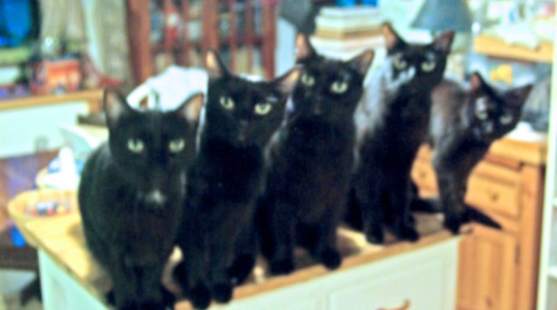 five black cats in a line