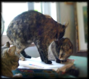 tabby cat and two tortoiseshell cats