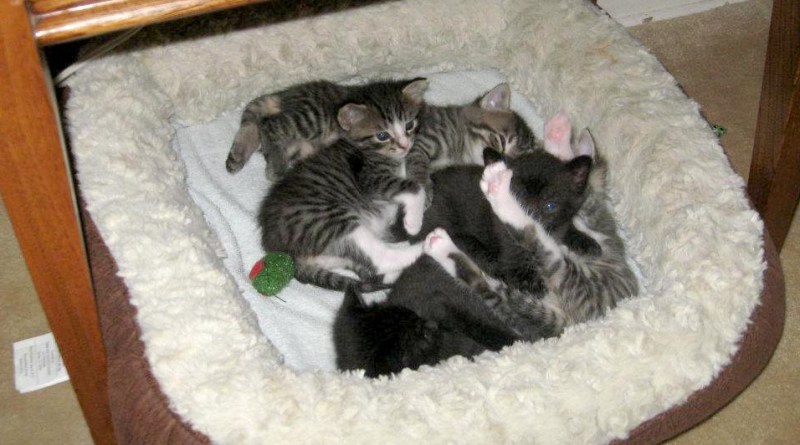 kittens in cat bed