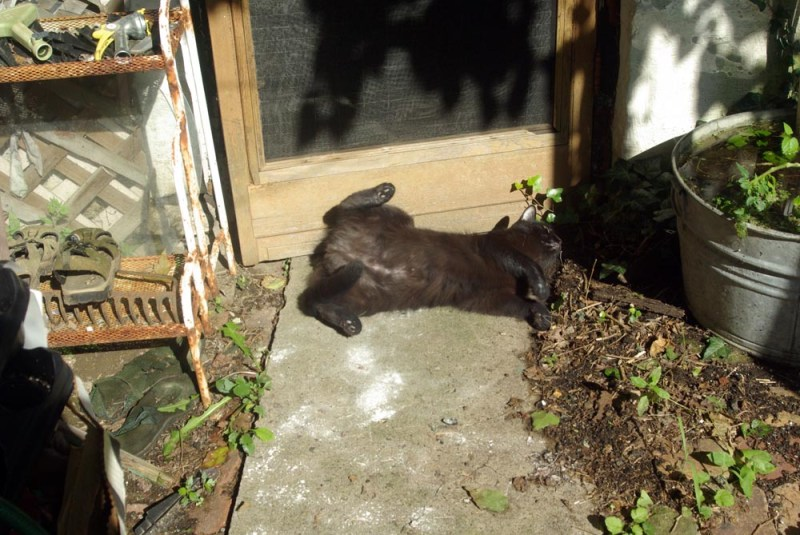 black cat rolling around on concrete