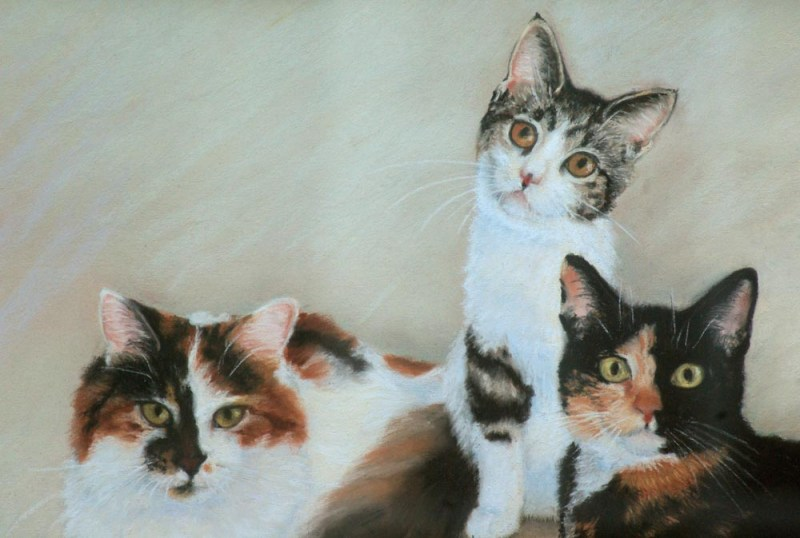 three calico cats