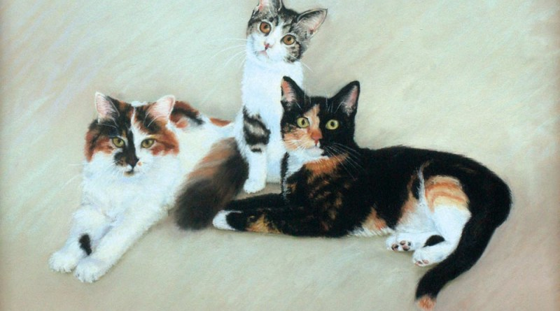 portraits of three calico cats