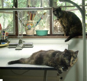two tortoiseshell cats in studio