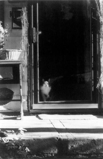black and white photo of cat in door