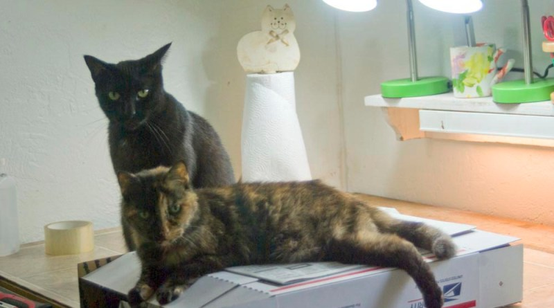 black cat and tortoiseshell cat on box