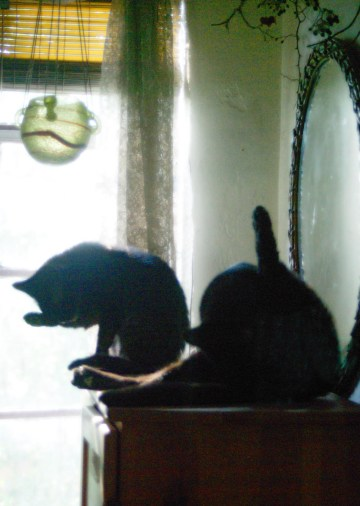 two black cats bathing