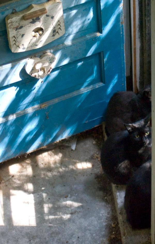 cats looking out door