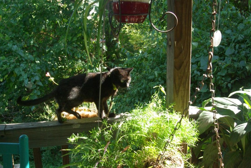 black cat on deck railing with plants