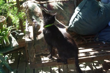 black cat on swing with pillows
