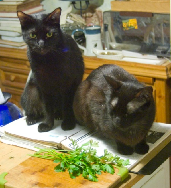 two black cats on cookbook