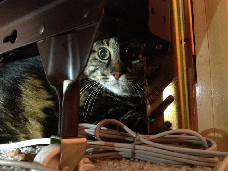 cat under bed