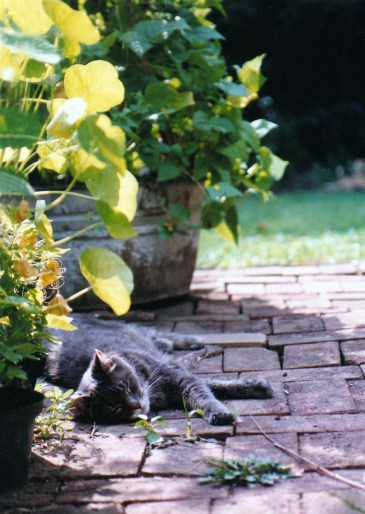 gray cat on bricks with garden plants