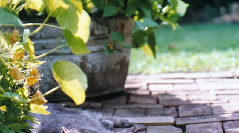 gray cat on bricks in shade