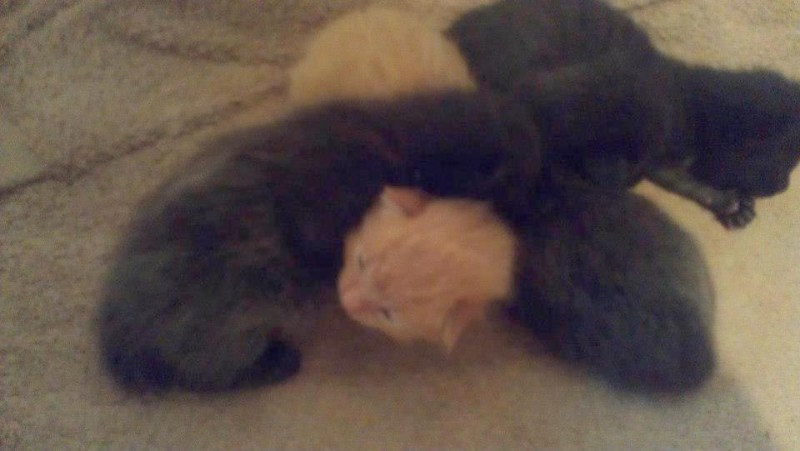 newborn kittens