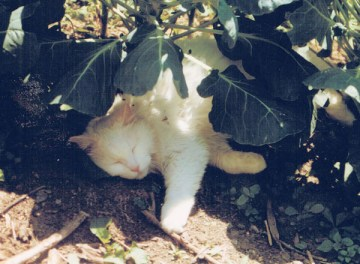 white cat sleeping in garden