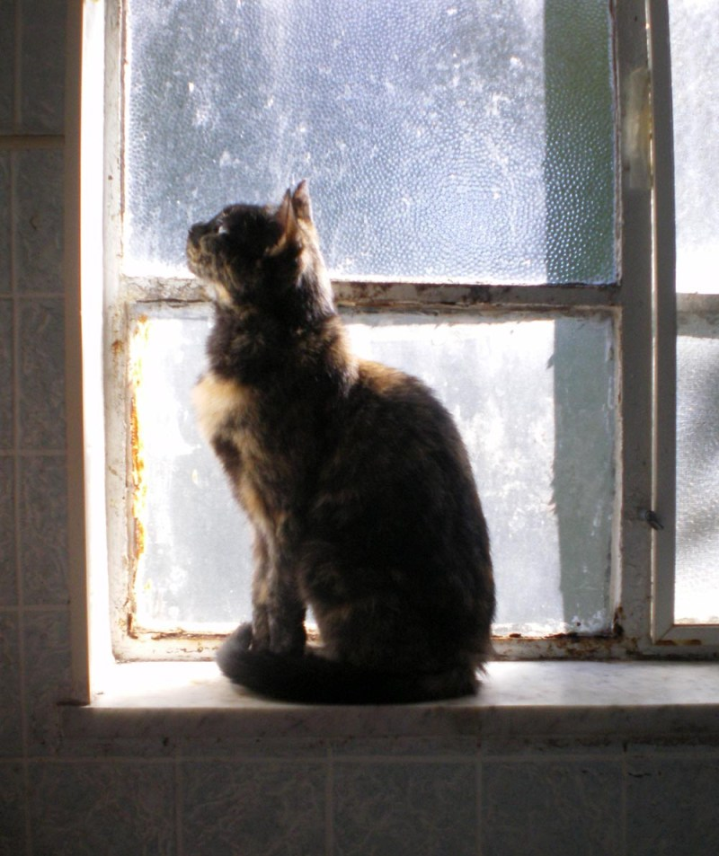 photo of cat on windowsill