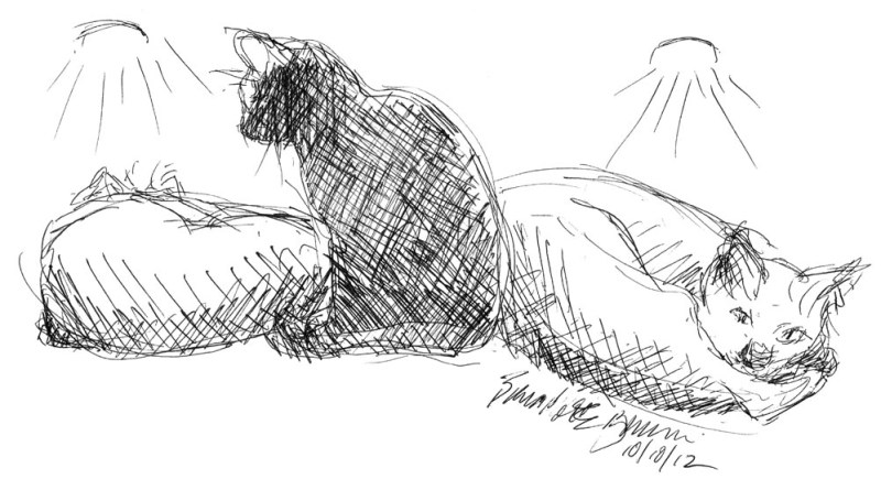 ink sketch of cat under lights