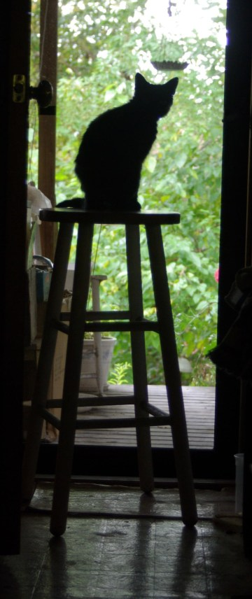cat on stool looking out door