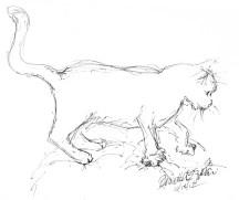 ink sketch of cat