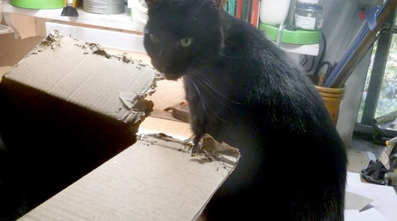 black cat with box
