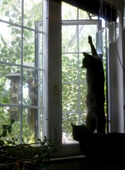 two cats at window with squirrel