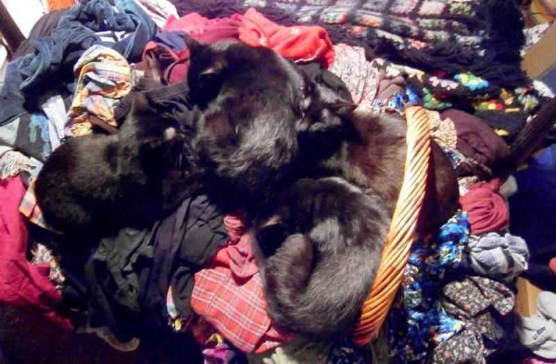 four black cats sleeping on laundry