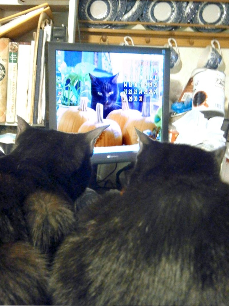 two black cats looking at computer