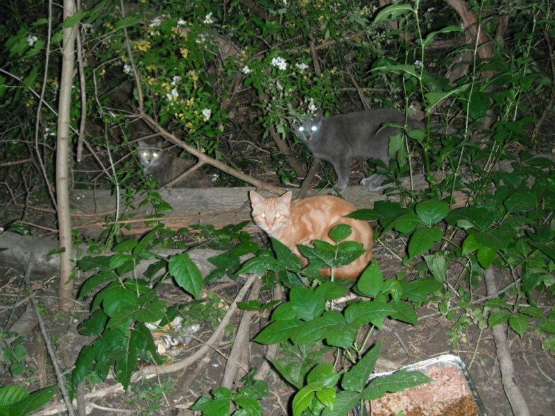 three cats outside