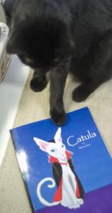 cat wth book