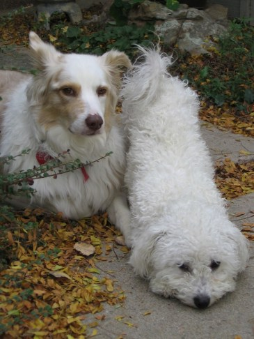 photo of two dogs
