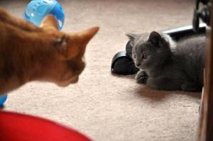 kitten and orange cat