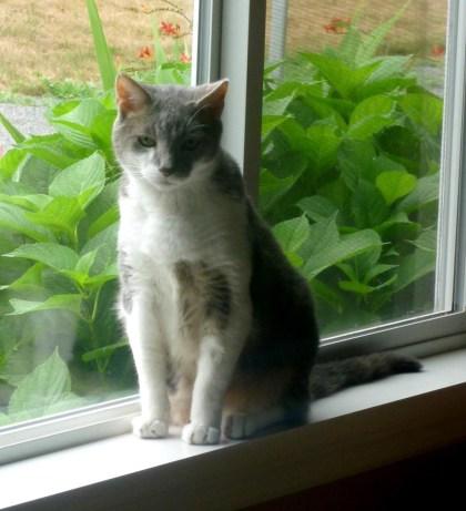 gray and white cat on windowsill