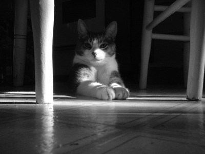 cat under table in shadows