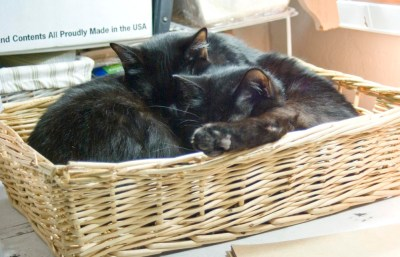 two black cats in basket