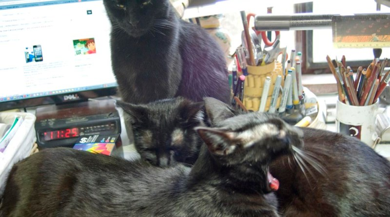 three black cats on desk