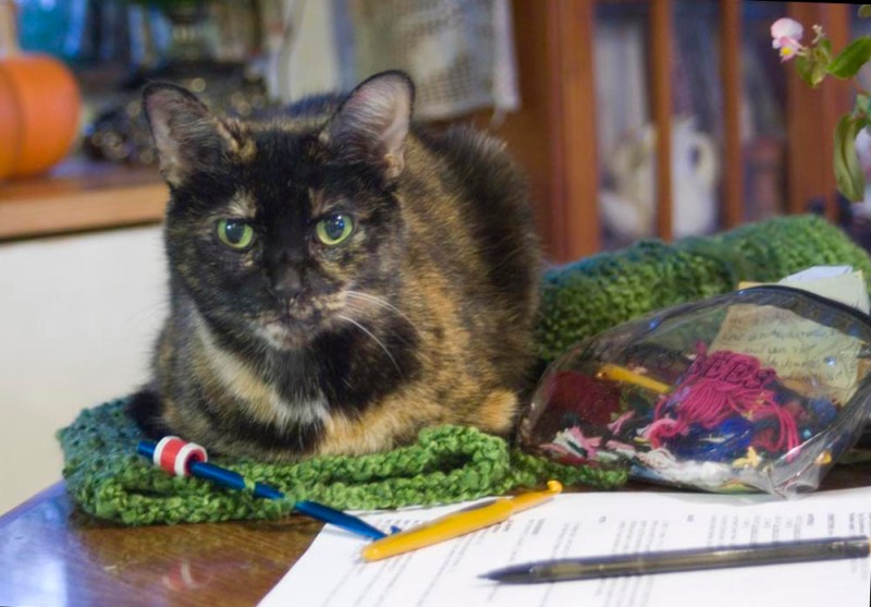 tortoiseshell cat on green crochet