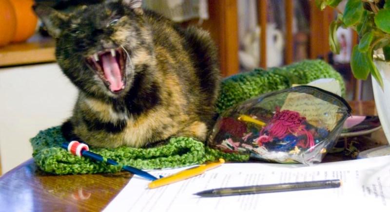 tortoiseshell cat yawning