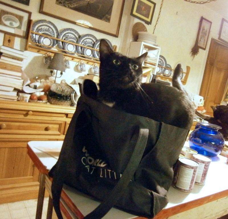 Black cat in black bag