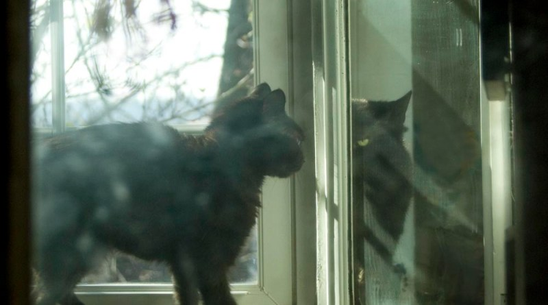 black cat walking toward mirror